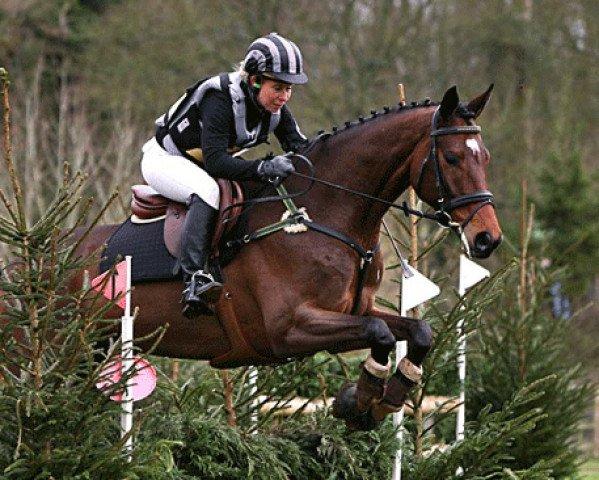 jumper Seigneur Medicott (Westphalian, 2006, from Seigneur d'Alleray xx)