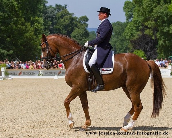 dressage horse Riccoletto (Bavarian, 2002, from Rivero II)