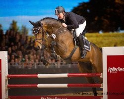jumper Chaccato (Hanoverian, 2010, from Chacco-Blue)