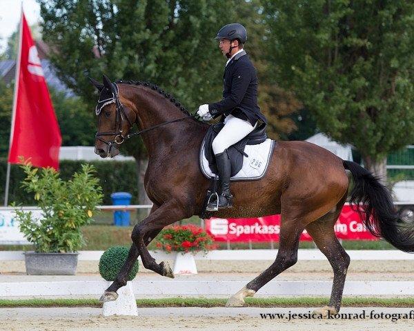 dressage horse Silberstern 21 (Hanoverian, 2010, from Silberschmied)
