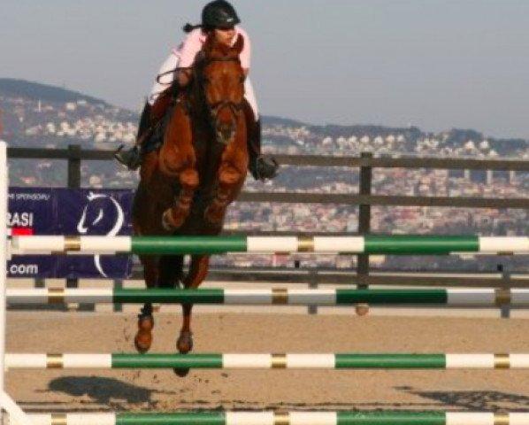 horse Calvin von Hof (Swiss Warmblood, 2000, from Cernunnus von Hof)