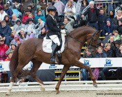 dressage horse Veneno HC (Westphalian, 2011, from Vitalis)