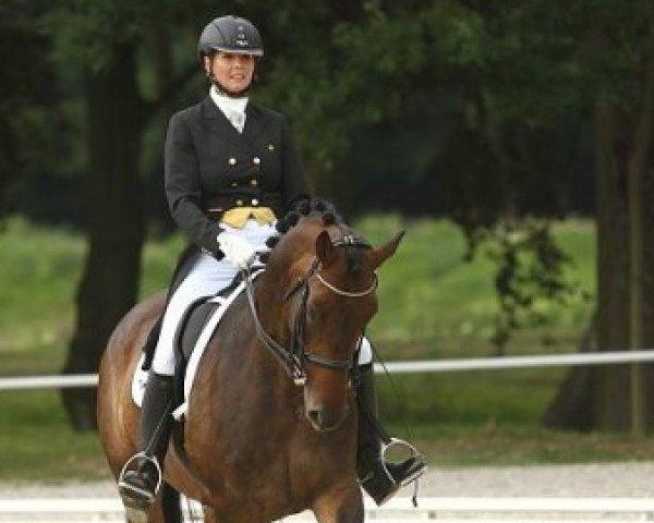 dressage horse Diplomat (Czech Warmblood, 2005, from Dantes)