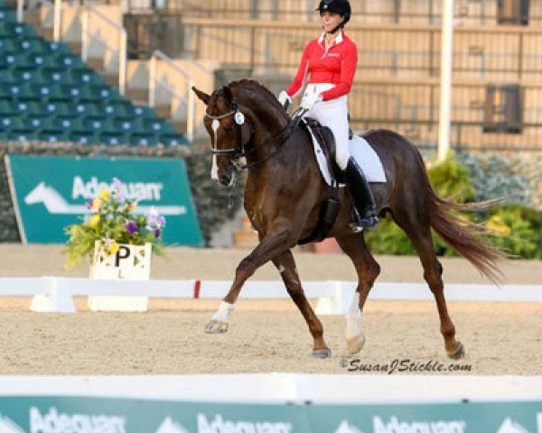 dressage horse Belafonte (Hanoverian, 2004, from Belissimo NRW)