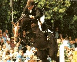 jumper Acorado I (Holsteiner, 1994, from Acord II)