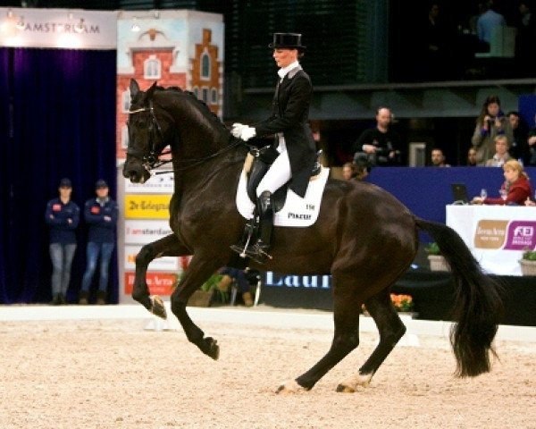 dressage horse Toots (Royal Warmblood Studbook of the Netherlands (KWPN), 2000, from Jazz)