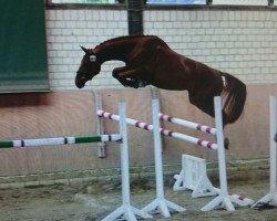 horse A-Probe (Oldenburg, 2007, from Argentinus)