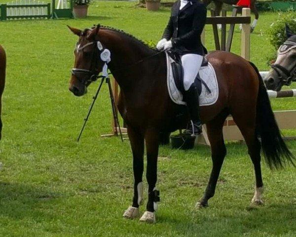 dressage horse Aragon L (Rhinelander, 2011, from Aaron)