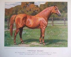 horse Hannibal xx (Thoroughbred, 1891, from Trachenberg xx)