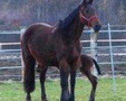 horse Valanta L (Royal Warmblood Studbook of the Netherlands (KWPN), 2002, from Sable Rose)