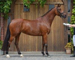 dressage horse Cor de la Luna (Hanoverian, 2010, from Caprimond)
