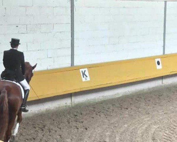 dressage horse Ribery Le Beau (Hanoverian, 2008, from Rascalino)