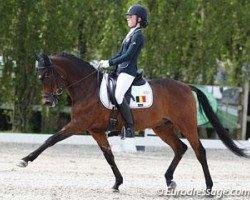 dressage horse Alexandre Dumas (German Riding Pony, 1999, from Don Pedro)