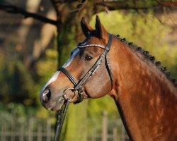 dressage horse Lugato (Rhinelander, 2004, from Lanciano)