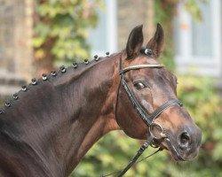 horse Florestan I (Rhinelander, 1986, from Fidelio)