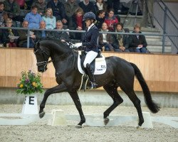 dressage horse All At Once (Royal Warmblood Studbook of the Netherlands (KWPN), 2010, from Ampère)