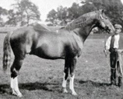 horse Hazlehatch xx (Thoroughbred, 1885, from Hermit xx)