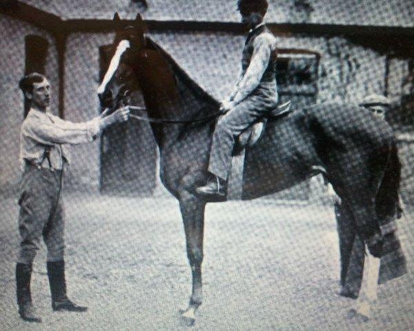 horse Birch-Rod xx (Thoroughbred, 1893, from Hazlehatch xx)
