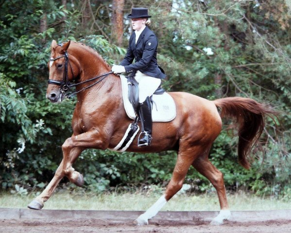 dressage horse Mr.Willoughby (Hanoverian, 1997, from Werther)