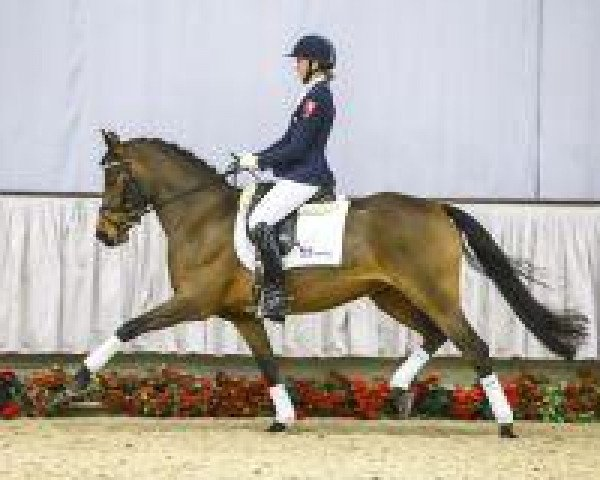 dressage horse Dubary (German Riding Pony, 2010, from Donnerwetter)