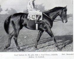 horse Graf Isolani xx (Thoroughbred, 1926, from Graf Ferry xx)