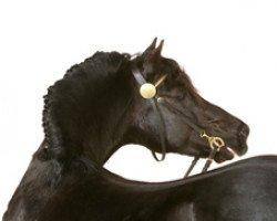 horse Fronarth Trysor (Welsh-Cob (Sek. D), 1988, from Cyttir Telynor)