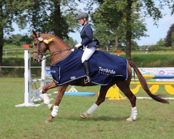 dressage horse Faible (Rhinelander, 2004, from Fidermark I)