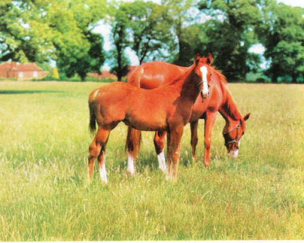 horse Lovely Light xx (Thoroughbred, 1966, from Henry The Seventh xx)