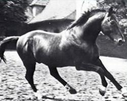 horse Ferdinand (Hanoverian, 1941, from Ferrara)