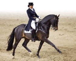 horse Conteur (Holsteiner, 1998, from Contender)