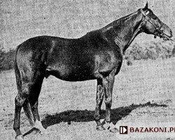 horse Orientale xx (Thoroughbred, 1944, from Birikil xx)
