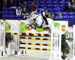 jumper Calvados (Zangersheide riding horse, 2001, from Chellano Z)