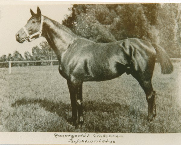 horse Perfectionist xx (Thoroughbred, 1899, from Persimmon xx)