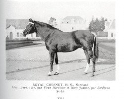 horse Royal Chesnut (Anglo-Norman, 1917, from Vieux Marcheur xx)