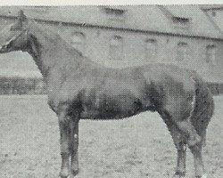horse Anfechter 3112 (Hanoverian, 1935, from Almjaeger I)