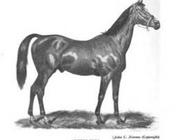 horse The Scottish Chief xx (Thoroughbred, 1861, from Lord of the Isles xx)