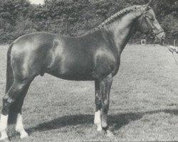 horse Utrecht (Royal Warmblood Studbook of the Netherlands (KWPN), 1978, from Heidelberg)