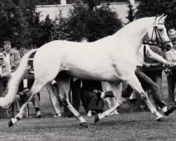 horse Patras (Trakehner, 1974, from Index)