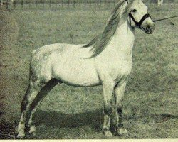 horse Revel Bluebird (Welsh-Pony (Section B), 1940, from Grove Sprightly)