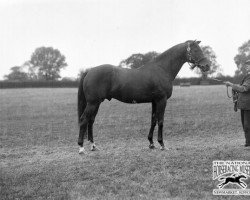 horse Winalot xx (Thoroughbred, 1921, from Son In Law xx)