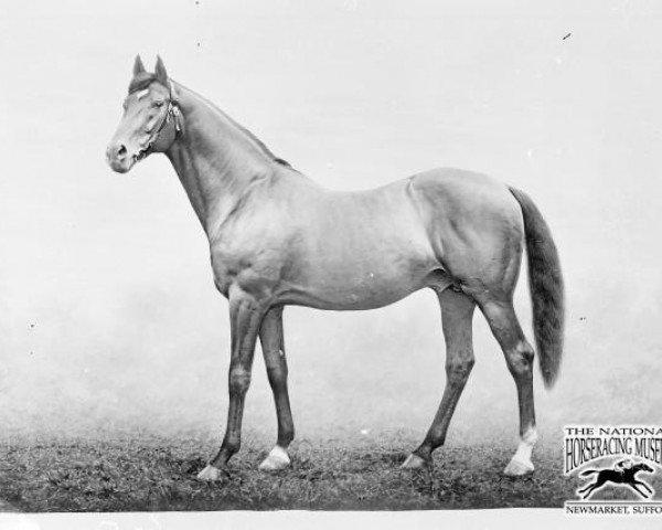 horse Trenton xx (Thoroughbred, 1881, from Musket xx)