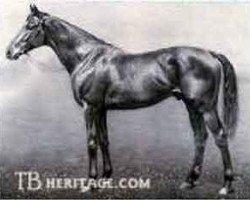 horse John O'Gaunt xx (Thoroughbred, 1901, from Isinglass xx)