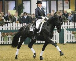 dressage horse Ovaro (Trakehner, 2001, from Hohenstein)