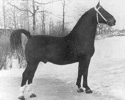 horse Folkert (Oldenburg, 1944, from Freigraf 3676)