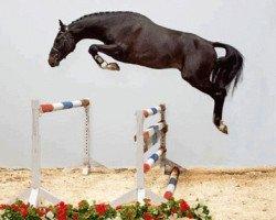 jumper Connor (Holsteiner, 2006, from Casall Ask)
