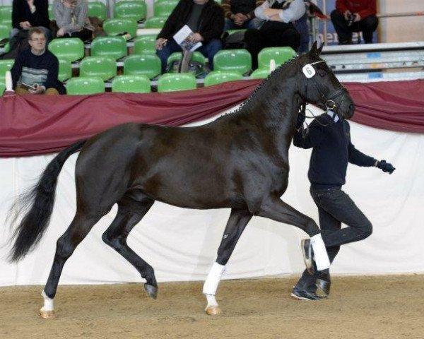 dressage horse Bossanova 28 (Bavarian, 2010, from Boston)