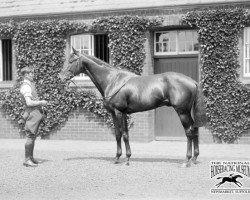 horse Cameronian xx (Thoroughbred, 1928, from Pharos xx)