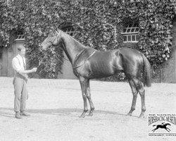 horse Buchan xx (Thoroughbred, 1916, from Sunstar xx)