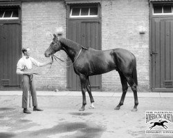 horse Blandford xx (Thoroughbred, 1919, from Swynford xx)