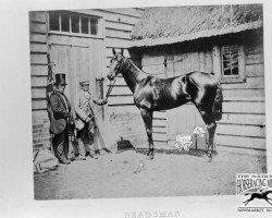 horse Beadsman xx (Thoroughbred, 1855, from Weatherbit xx)
